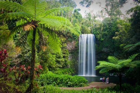 Explore the rainforest Australia impactdestinations