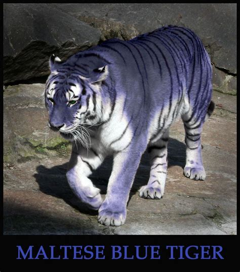 Images About Blue Tigers Pinterest Photo
