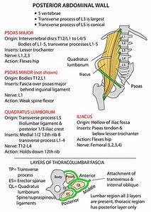 Instant Anatomy - Abdomen - Areas  Organs