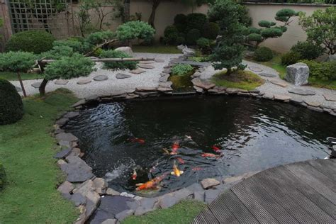 garden koi pond design koi fish pond tips sweeney feeders