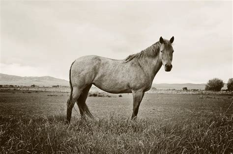 black  white horse photography standing horse horse