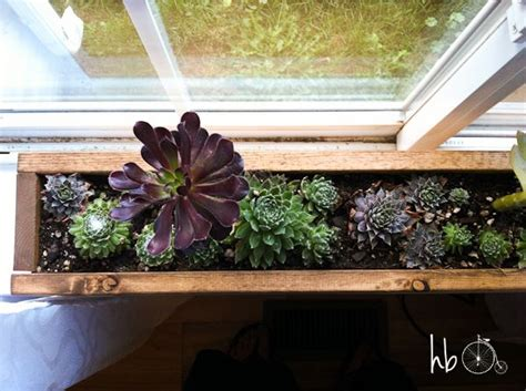 Kitchen Window Sill Planter by Best 25 Indoor Window Boxes Ideas On Indoor