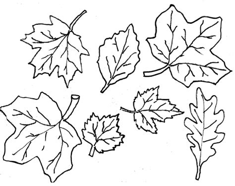 20+ Free Printable Fall Leaves Coloring Pages