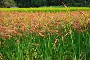 Biodiversity Dips When Japanese Rice Paddies Go Fallow ...