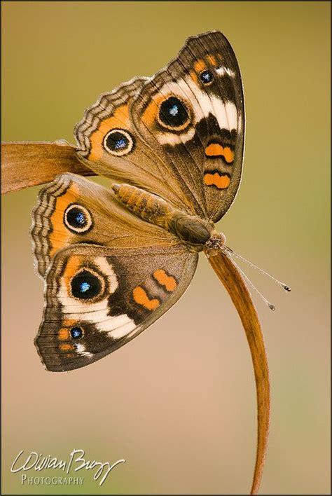 jean gabin papillon les 119 meilleures images du tableau papillons sur