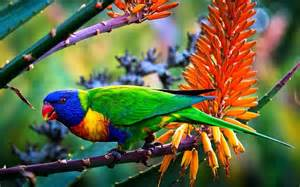 Large Colorful Birds