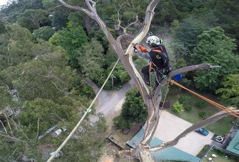 spectaculaire intervention pour couper les branches dun