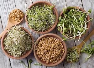 Comment Faire Germer Une Graine : pourquoi et comment faire germer des graines ~ Melissatoandfro.com Idées de Décoration