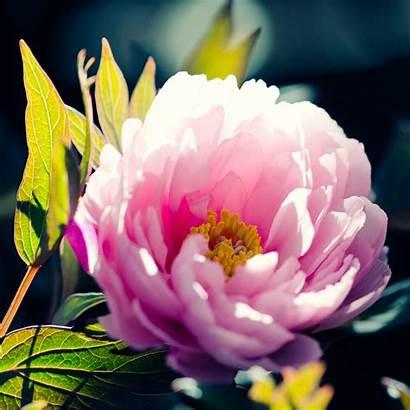 Flower Ipad Iphone Wallpapers Uri Ipod Retina