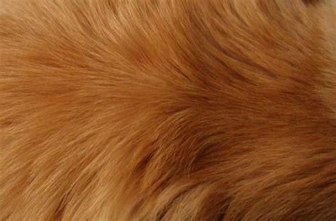 collection  high quality  fur textures designbeep