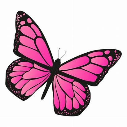 Borboleta Butterfly Rosa Mariposa Transparent Vetor Svg