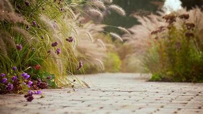 Background Screen Wallpapers Flowers Flower Widescreen Login