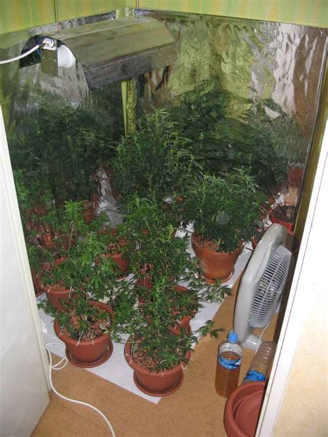 culture d interieur cannabis mr green culture cannabis