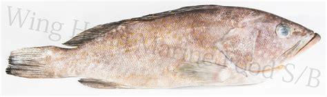 grouper frozen