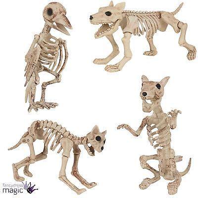 1000 ideas about animal bones on raccoon skull skeletons and skulls