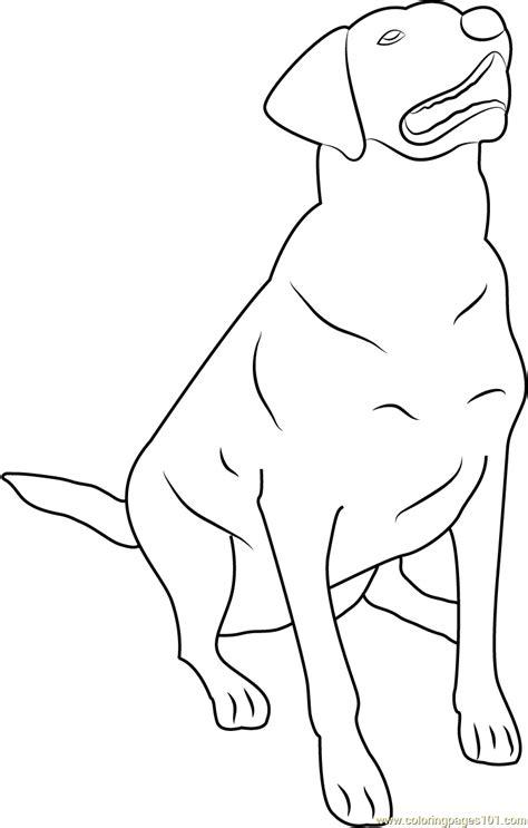 labrador coloring pages labrador coloring pages sketch coloring page