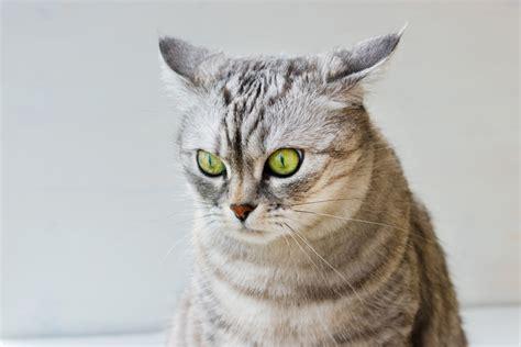 katzenpsychologie und tierhomoeopathie stress unter katzen