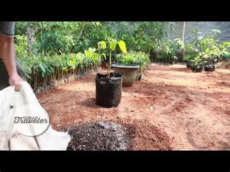 membuat pupuk organik  tanaman durian