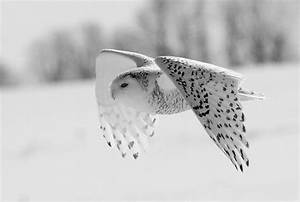 art, beautiful, black and white, cold, cute - image ...