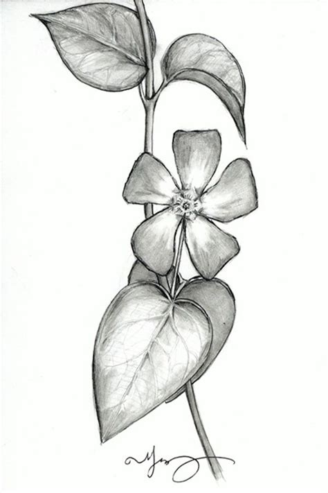 easy flower pencil drawings  inspiration pencil