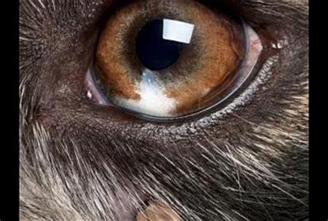 dog skin parasites paperblog