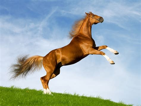 horse facts wild horses amazing wildlife bavarian rearing mustang animals equestrian cavalo fotos awesome running arabian wallpapers hd