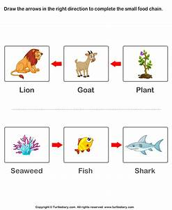 Complete the Food Chain - Fill in Arrows Worksheet ...