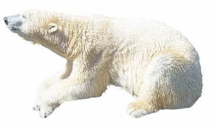 Polar Bear Transparent Pngpix Animal
