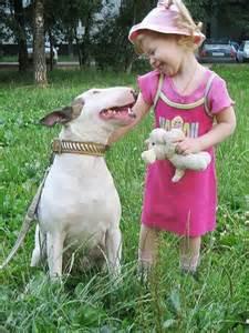 English Bull Terrier Babies