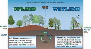 Urban Wetland Diagram