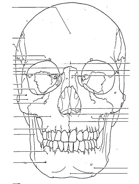 45 skull bones anatomy coloring pages heres our cranium