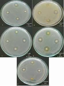 Determination Of Antioxidant And Antimicrobial Activities Of Medically Important Mushrooms Using