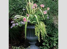 10 Plants for Yearround Containers Fine Gardening