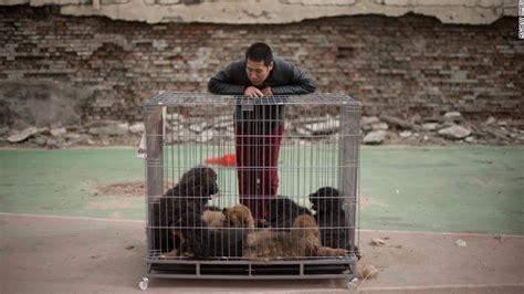 puppy smugglers feed hks big dog craze cnncom