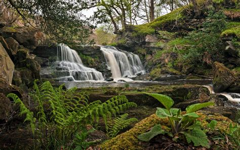 Waterfall Plants Rocks Landscape Wallpapers Hd Desktop And Mobile Backgrounds