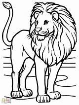 Lion Coloring Animal Mewarnai Gambar Printable Lions Colouring Animals African Vampirina Menggambar Berat Semesta Meliputi Alat Pemandangan Alam Tersebut Bola sketch template