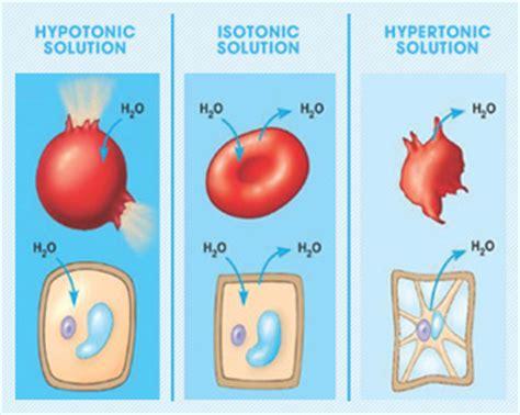 hypertonic hypotonic isotonic explain   reps