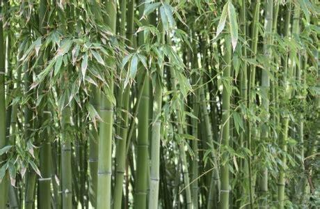 Bambus Wuchert Was Tun bambus wuchert 252 ber den ganzen garten was tun