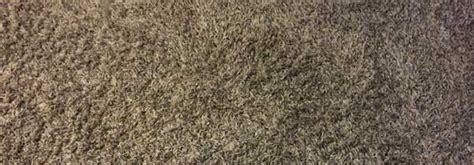 enlever  tapis colle facilement le bricoleur