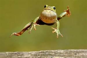 Frosch Bilder Lustig : kr te oder frosch wo ist der unterschied ~ Whattoseeinmadrid.com Haus und Dekorationen