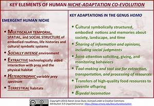 The Human Niche – An Overview | The Biocultural Evolution Blog