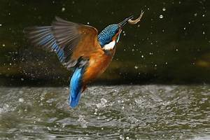 30 Stunning Examples of Nature Photography | Famous Photographers