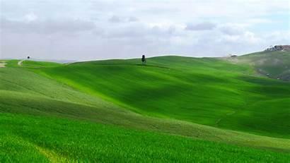 Rumput Padang Hijau Gambar Pemandangan Grass Mound