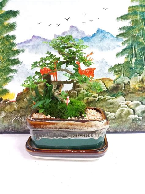 บอนไซมะสังดัด ต้นไม้สายย่อ ต้นไม้ตกแต่งโต๊ะทำงาน DIY | บอนไซ