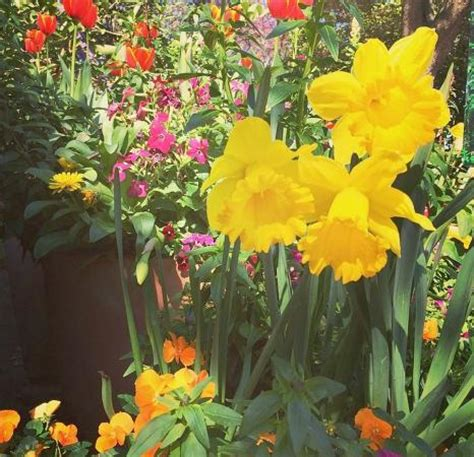 flowers in bloom san antonio botanical gardens picture