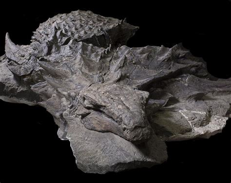 Worker Discovers 100-million-year-old World-changing Relic