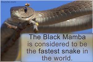 Mind-blowing Facts About Snakes That Will Leave You ...