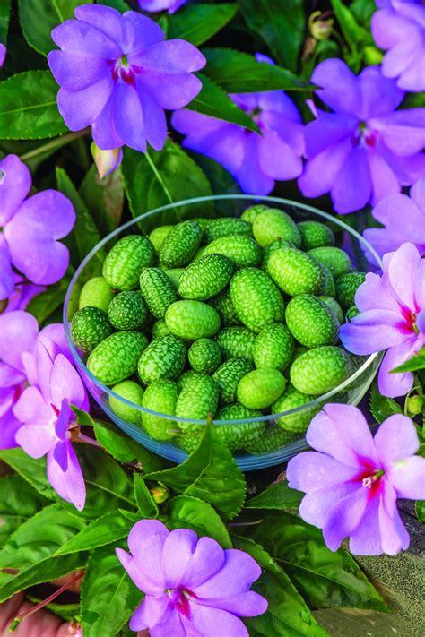 exotic vegetables  herbs hgtv