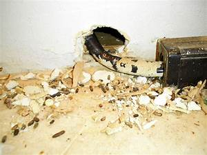 Animal trapping and removal photos for Mice in between floors