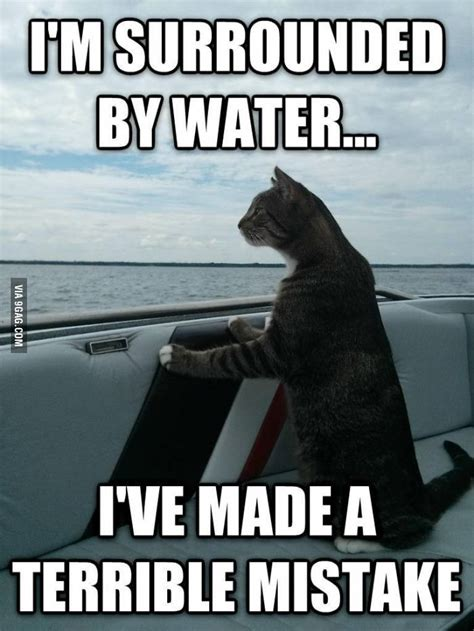 Cat Meme Boat - 17 best images about nautical humor on pinterest jokes pirates and sailing